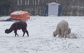wintercamping nederland zeeland
